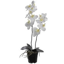 Pot -Orchid x2- plastic 57cm cream